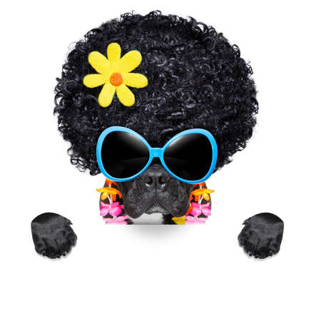 hippie dog of the seventies with big afro wig  a yellow flower behind blank banner photo