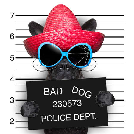 mugger: mugshot of very bad mexican wanted dog Stock Photo
