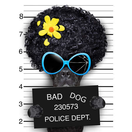 bad hair: mugshot of hippie wanted dog Stock Photo