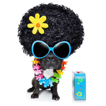 hippie dog of the seventies with big afro wig  a yellow flower photo