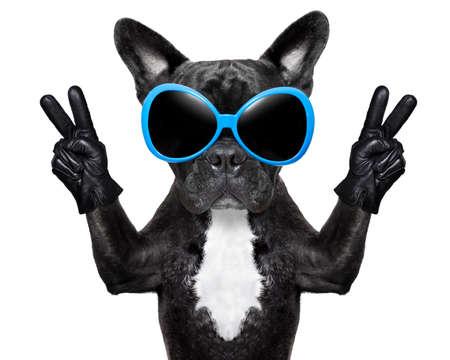 sunglasses: perro muy fresco con dedos de la paz el uso de guantes y gafas de sol de lujo