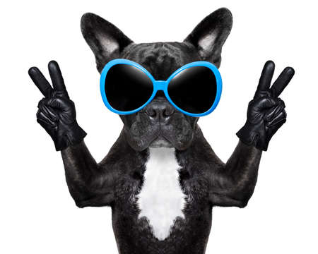 very cool dog with peace fingers wearing gloves and fancy sunglasses photo