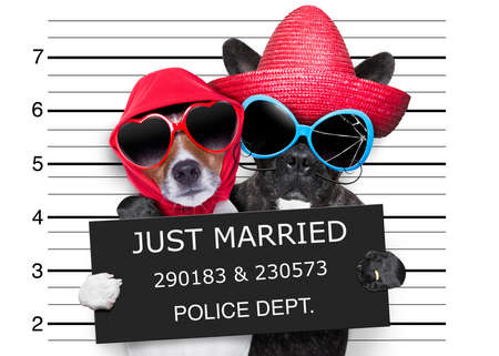 two dogs just married and together in a mugshot picture photo