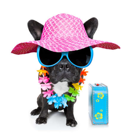 lei: dog on vacation wearing fancy sunglasses and funny flower chain with luggage