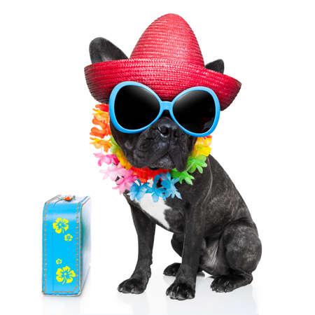 Cão em férias usando óculos de sol extravagantes e cadeia engraçado flor com bagagem