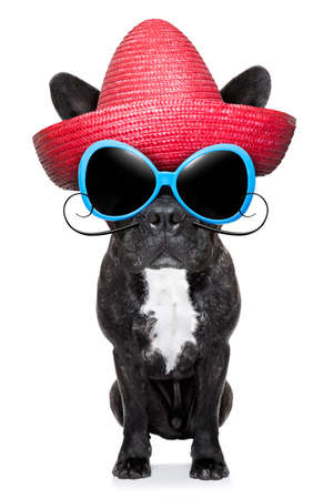 french bulldog with a red mexican sombrero photo