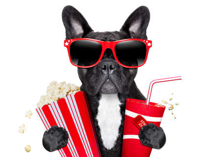 funny movies: dog going to the movies with soda and glasses Stock Photo