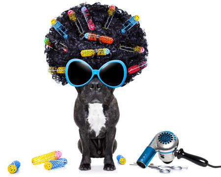 dog at hairdresser with afro black hair and glasses