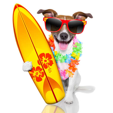 silly funny surfer dog with fancy surf board and flower chain photo