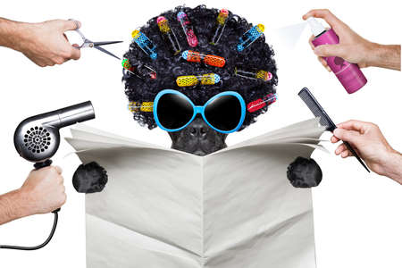 kapster: kapper hond met een witte lege krant of tijdschrift