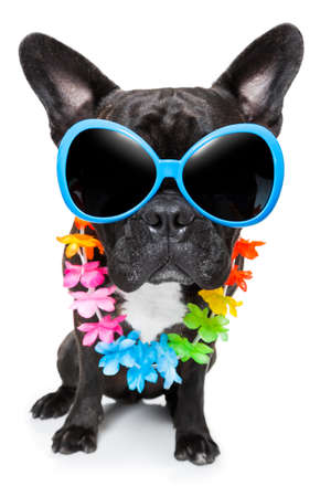 dog on vacation wearing  fancy sunglasses and flower chain photo