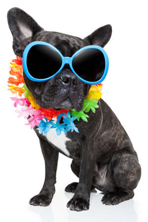 hawaiian lei: dog on vacation wearing  fancy sunglasses and funny flower chain