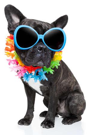 frans: hond op vakantie draagt fancy zonnebril en grappige bloem ketting