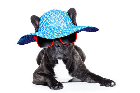 french bulldog with fancy summer hat and red sunglasses photo