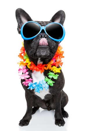frans: hond op vakantie draagt fancy zonnebril steekt tong