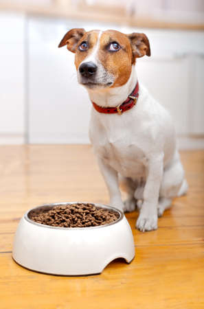 healthy foods: hungra dog waiting to eat out of  his big white bowl