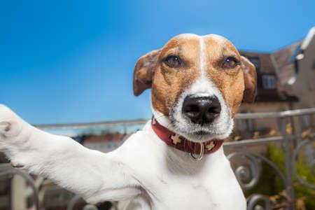 犬はスマート フォンと selfie を取る