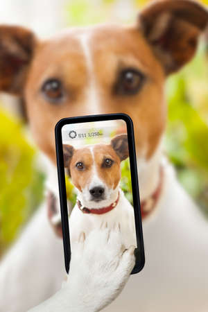 dog taking a selfie with a smartphone Stock Photo
