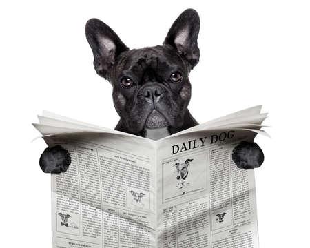 zwarte franse bulldog lezen van een grote krant