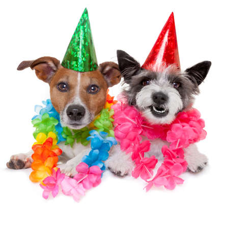 birthday flowers: twee grappige verjaardag honden vieren dicht samen als een paar