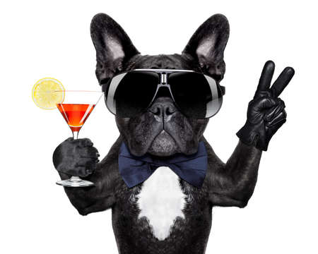 congratulation: dog with martini cocktail and victory or peace fingers