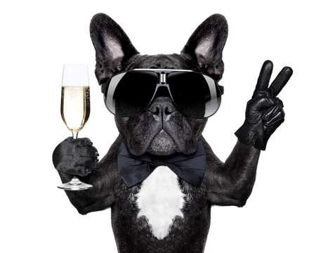 französisch Bulldogge mit einem Champagner-Glas und der Sieg oder Frieden Finger