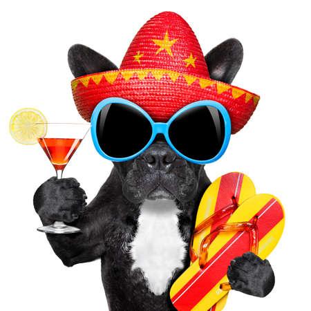 copa martini: perro con un vaso de martini y un sombrero mexicano Foto de archivo