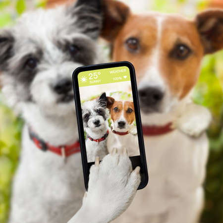 puppy dog: couple of dog taking a selfie together with a smartphone