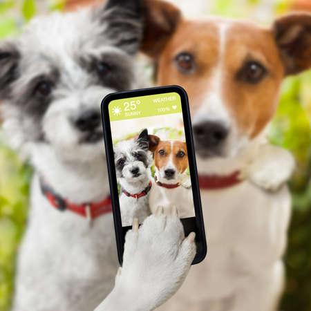 dog days: par de perro tomar un selfie junto con un smartphone Foto de archivo