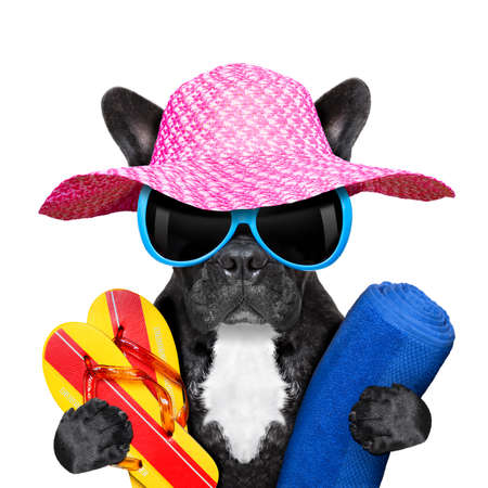 sunglasses beach: french bulldog  on summer holidays with towel and flip flops Stock Photo