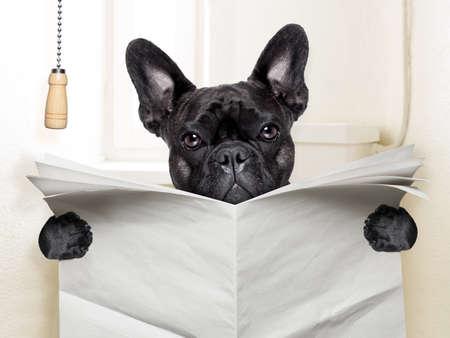 französisch Bulldogge sitzt auf Toilette und liest Zeitung