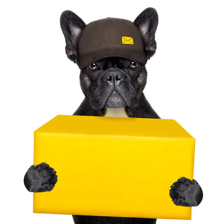 postal dog delivering a big yellow package photo