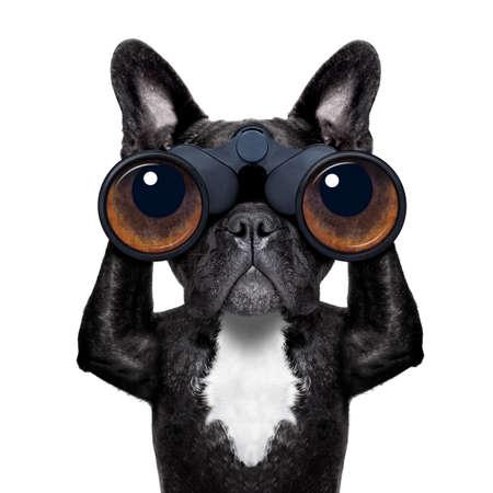 binóculos cão pesquisando, olhando e observando com cuidado