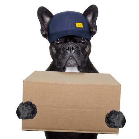 postal dog delivering a big brown package photo