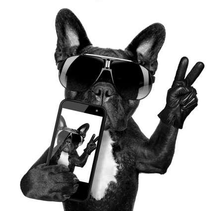 クールな派手なサングラスと selfie を取るフレンチ ブルドッグ