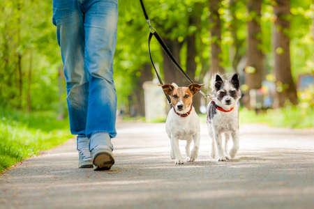 ägare och två hundar som går på en promenad