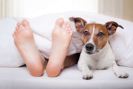beds: dog and owner under bed sheet relaxing