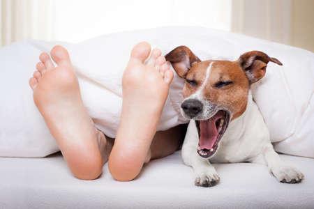 cama: Perro de bostezo en la cama con el propietario en virtud de la hoja de cama blanca