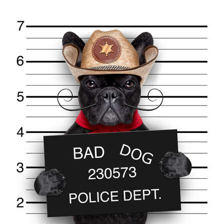 frans: slechte mexicaanse hond in een politiecel mugshot Stockfoto