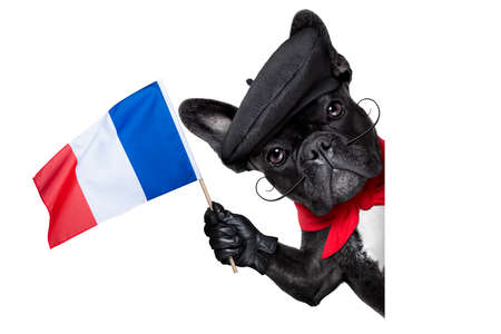 french bulldog behind a white and blank banner waving flag of france photo