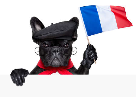 french bulldog: french bulldog holding a flag of france