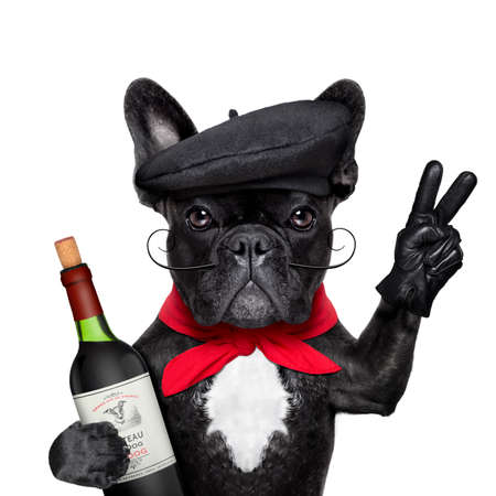 vino: bulldog francés con vino tinto, la paz o la victoria los dedos y la boina francés