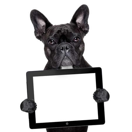 dogo: bulldog francés que sostiene una PC de la tableta de la pantalla táctil