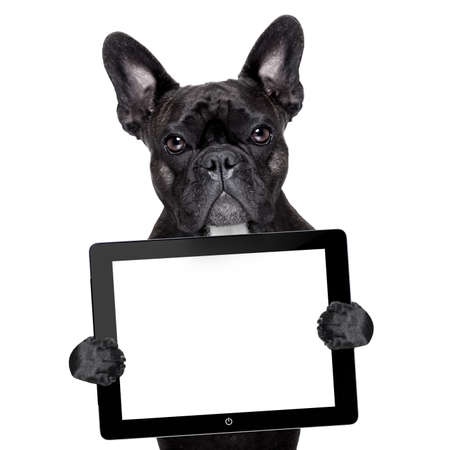 french bulldog holding a touch screen tablet pc photo
