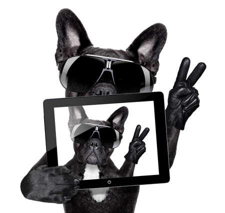 frans: franse bulldog maken van een selfie met tablet pc Stockfoto