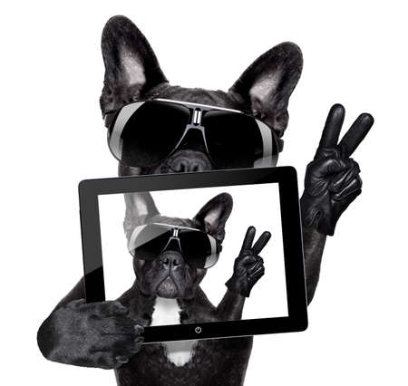 french model: french bulldog making a selfie with tablet pc Stock Photo