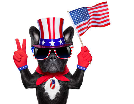 national hero: french bulldog waving a flag of usa and victory or peace fingers