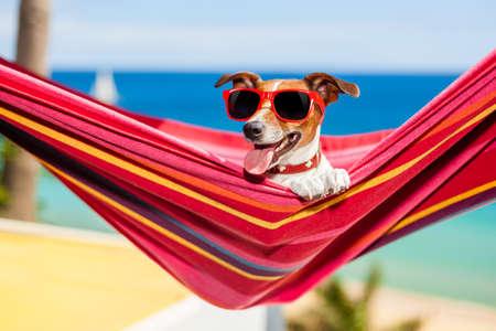 vasos de agua: perro de relax en una hamaca roja elegante con gafas de sol