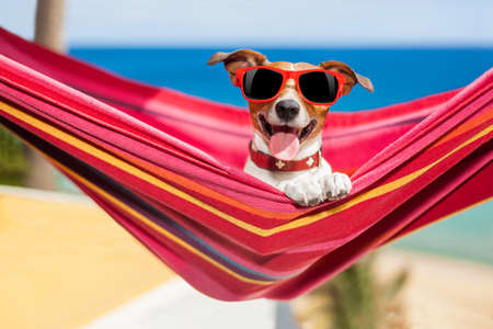 dog relaxing on a fancy red  hammock with sunglasses