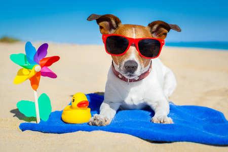sonnenbaden: Hund spielt mit Sonnenbrille am Strand in den Sommerferien Urlaub